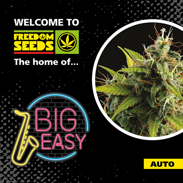 Big Easy Auto - Freedom Seeds - Top Selling Auto