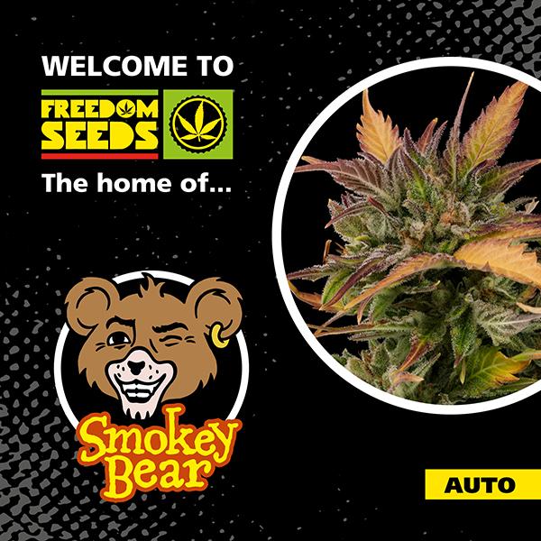 Smokey Bear Auto - Freedom Seeds - Top Selling Auto