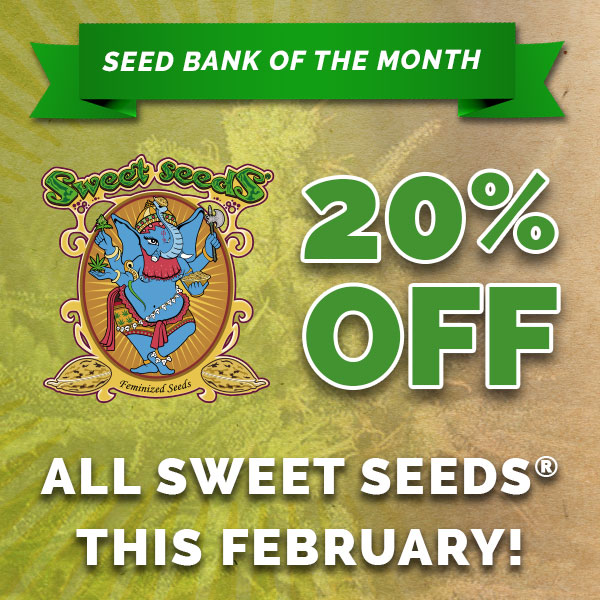 20% off Sweet Seeds at Freedom Seeds
