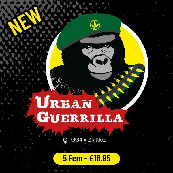 NEW - Urban Guerrilla Freedom Seeds