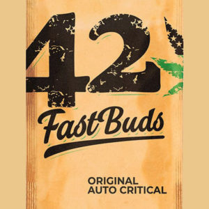 Auto Critical - Fast Buds
