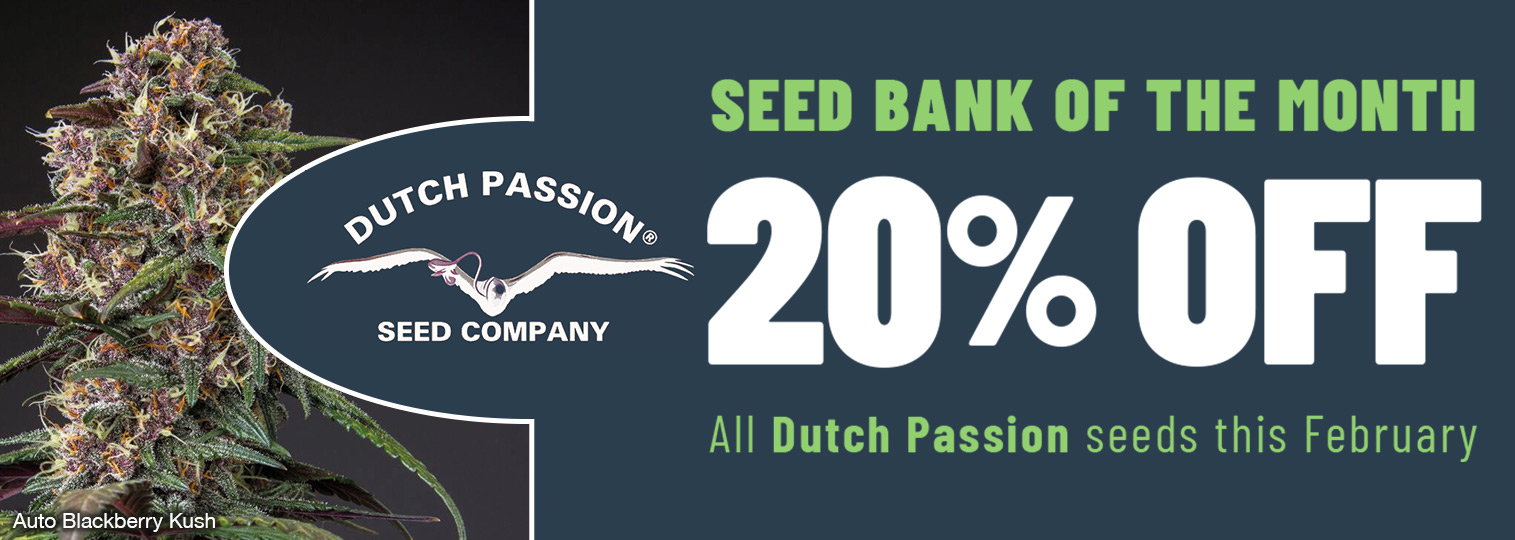 20% off Dutch Passion