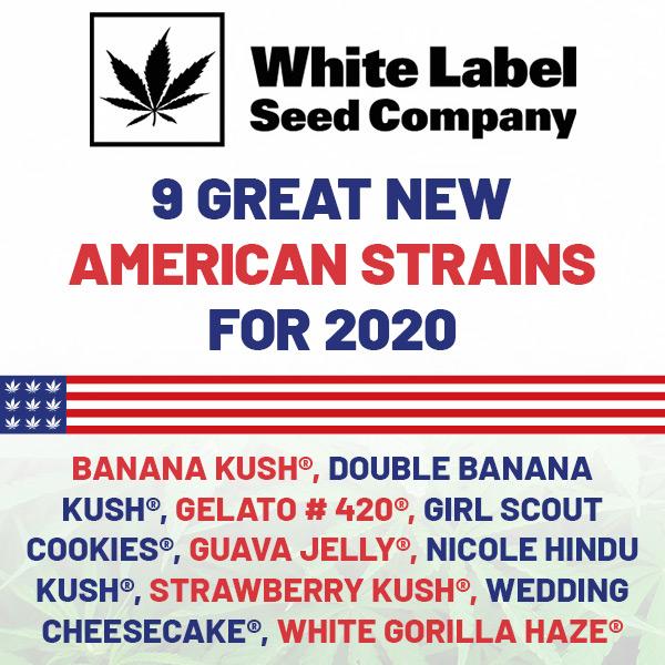 NEW White Label American Genetics