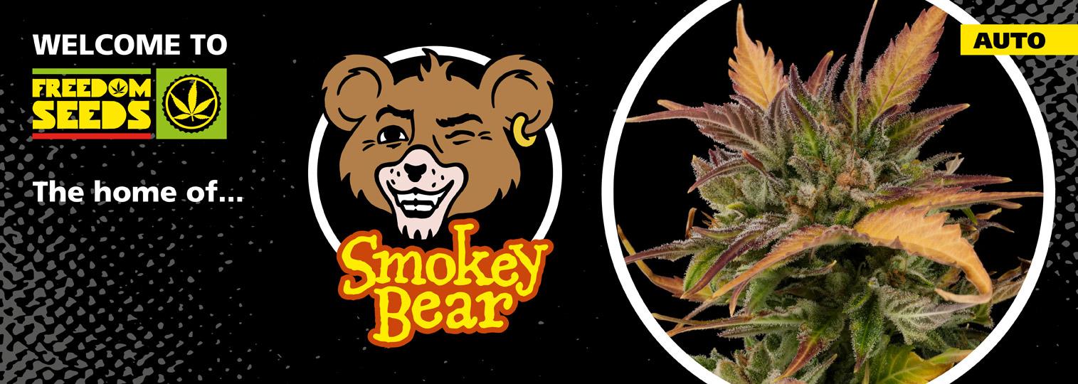 Smokey Bear XL
